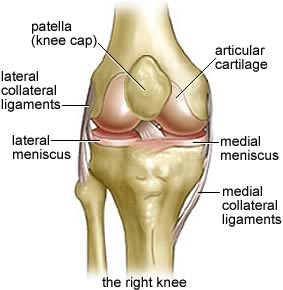 Chiropractors View of the Anatomy of the Knee